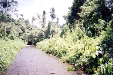 The river that is also called `Buhi' which means life (buhay). This is the source of water of the Dibabawon for drinking and irrigation.